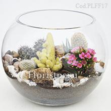 Cactus Terrarium Plff17